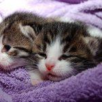 ペットが増える夢、ペットを食べる夢についての夢占い