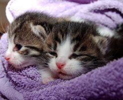 夢占い ペット 増える 食べる