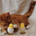 猫とひよこが出てきた場合の夢占いについて