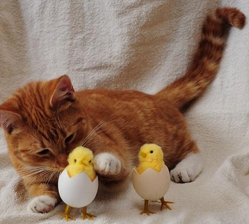 夢占い 猫 ひよこ