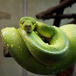 蛇や虫を投げられる夢占いについて