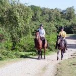 馬に乗って競争する夢の夢占い