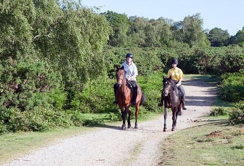 夢占い 馬 競争