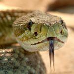 夢占いで、蛇、カエル、猫を踏んでしまうことの持つ意味は?