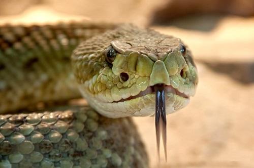 夢占い 蛇 カエル 猫 踏む