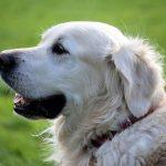 犬に助けられる夢占いの意味とは!?