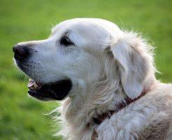 夢占い 犬 助けられる