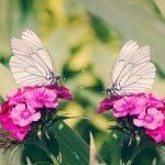 夢占いでの蝶について。  『幼虫→さなぎ→大人の蝶』は、成長と霊的存在を象徴