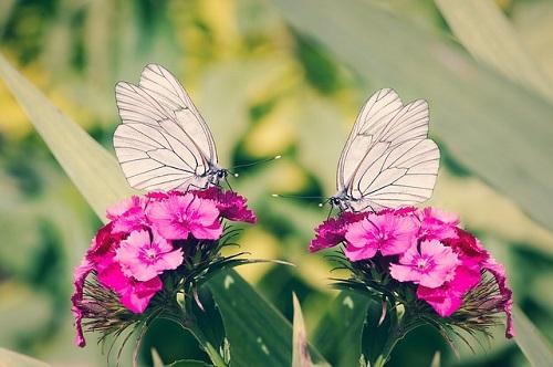 夢占い さなぎ 幼虫 蝶