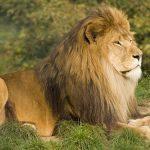 夢占い ライオン トラ 熊について