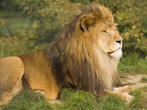 夢占い ライオン トラ 熊
