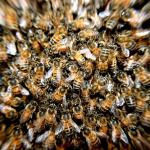 蜂が大群、大量で出てくる夢占いの意味とは?