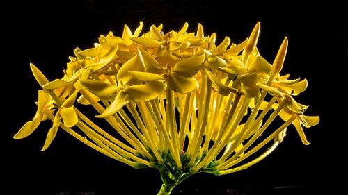 夢占い 花 枯れる 咲く