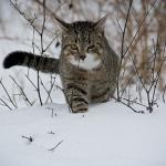 猫に雪や携帯を投げる夢占いの意味
