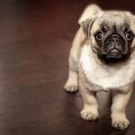 犬を呼ぶ夢。夢占いではどんな意味がある?