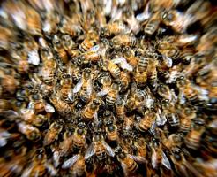 夢占い 蜂 大群 大量