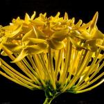 枯れている花、花が咲く夢占い