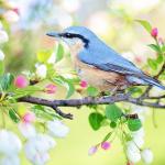 鳥が出てくる夢、鳥が喋る夢、魚が出てくる夢