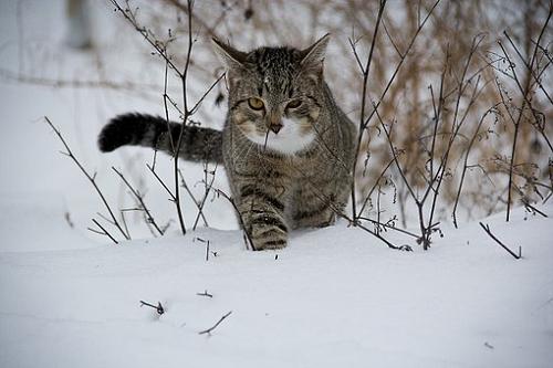 夢占い 猫 雪 携帯 投げる