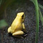 金色のカエルを見た夢の夢占いは?