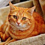 猫が出てくる・金縛り中に声が出ない夢占いについて
