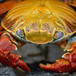 エビやザリガニ、蟹など甲殻類が脱皮する夢の夢占い