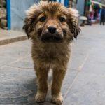 夢占いで犬が迷子になる・迷子の犬を探す・迷子の犬を見つけるの意味とは?