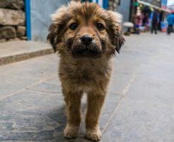 夢占い 迷子 犬 探す 見つける