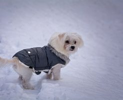 夢占い 雪 犬 そり