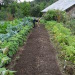夢占いで野菜を植える夢、虫がつく夢の意味