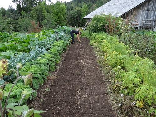 夢占い 野菜 植える 虫