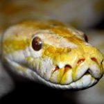 巨大な蛇やトカゲが出てくる夢占いについて