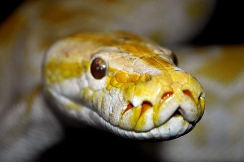 夢占い 巨大 蛇 トカゲ