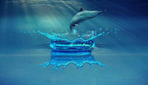 夢占い 蛇 クジラ シャチ ジャンプ