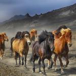 犬や象、馬が群れを成している夢占いの意味とは!?