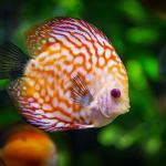 お風呂に虫がいる夢や魚の夢占いの意味とは!?
