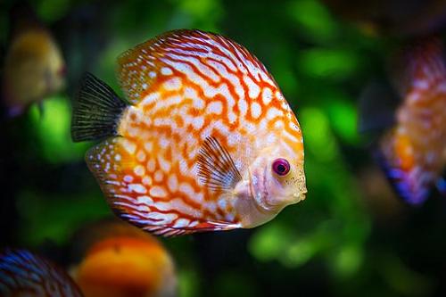 夢占い お風呂 虫 魚