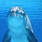 イルカの夢やイカを釣る夢占いの意味とは!?