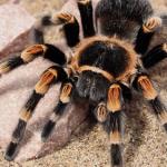 大きな蜘蛛や大きなムカデの夢占いの意味とは!?