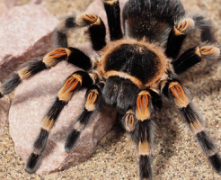 夢占い 大きい 蜘蛛 ムカデ