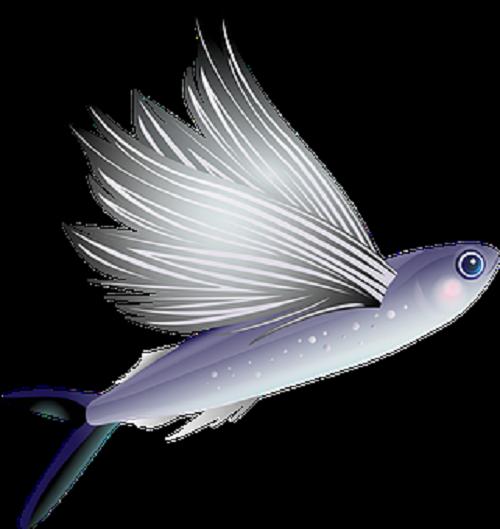 夢占い 空を飛ぶ 平泳ぎ 魚