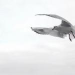 空を飛んで逃げる夢と異性と空を飛ぶ二つの夢占いの意味は?