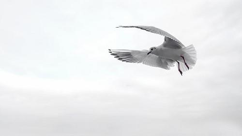 夢占い 空を飛ぶ 逃げる 異性