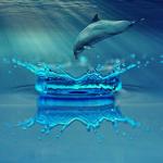 蛇やクジラ、シャチがジャンプする夢占いの意味とは!?