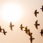カラスや鳩の群れの夢占いの意味とは!?