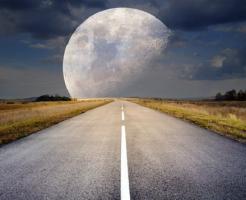 夢占い 大きい 犬 猫 月
