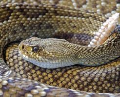 夢占い 大きい 虫 蛇