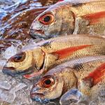 鯉や鯛を釣る夢占いの意味とは!?