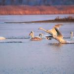 白鳥や魚、鳥が群れている夢占いの意味とは!?