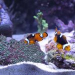 水槽で熱帯魚を飼う夢、魚が産卵する夢占いについて